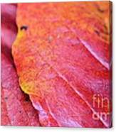 Abstract Dogwood In Autumn Canvas Print