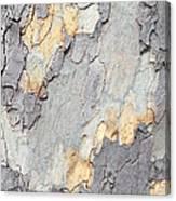 Abstract Tree Bark II Canvas Print