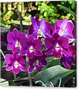Accented Purple Orchid  Canvas Print