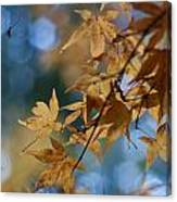 Acer Autumn Canvas Print