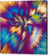 Acetaminophen Crystals Tem Canvas Print
