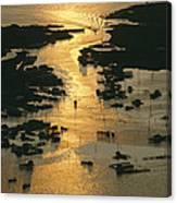 Aerial Shot, Tangier Island, Chesapeake Canvas Print