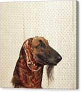 Afghan Hound Wearing Scarf Canvas Print
