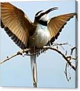 African Bee Eater Canvas Print