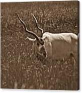 African Grassland Feeder Canvas Print