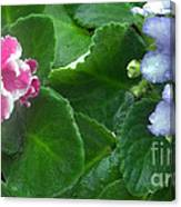 African Violets Intertwined I Canvas Print