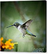 Afternoon Snack - Artist Cris Hayes Canvas Print