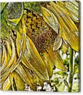 Afternoon Sunflower Canvas Print