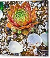 Agates And Cactus Canvas Print