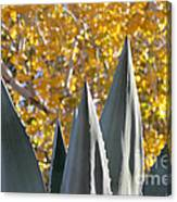 Agave Spikes In Autumn Canvas Print