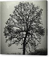 Age Old Tree Canvas Print