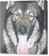 Akita And German Shepherd Mix  Canvas Print