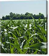 Alabama Field Corn Crop Canvas Print