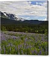 Alaska Lupine Canvas Print