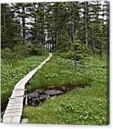 Alaska Meadow Trail Canvas Print