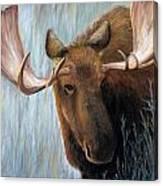 Alaskan Bull Moose Canvas Print