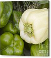 Albino Bullnose Pepper Canvas Print