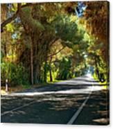 Albufera Road To El Palmar. Valencia. Spain Canvas Print
