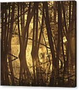 Alder Tree Marshland At Sunrise Canvas Print