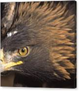 Alert Golden Eagle Canvas Print