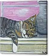 Alex On Windowsill  Canvas Print