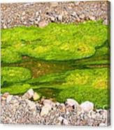 Algae Bloom Natural Abstract Art Of Nature Canvas Print