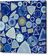 Algae, Fossil Diatoms, Lm Canvas Print