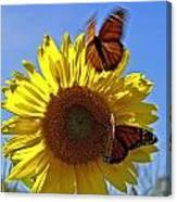 All A Flutter Canvas Print