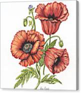 All About Poppies Canvas Print
