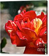 All American Magic Rose Canvas Print