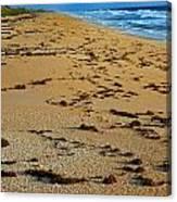 All Beach Canvas Print
