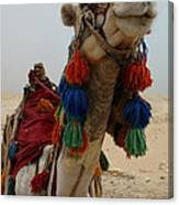 Camel Fashion Canvas Print