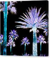 All The Palms Canvas Print
