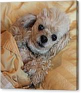 All Tucked In Canvas Print