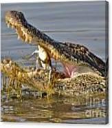 Alligator Get Lunch Canvas Print