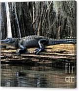 Alligator Sunning Canvas Print