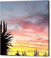 Aloe Ferox  South Africa Canvas Print