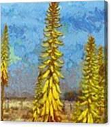 Aloe Vera Flowers Canvas Print