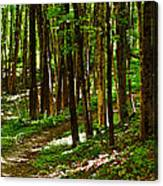 Along The Hiking Trail Canvas Print