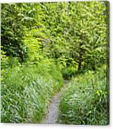 Along The Path Canvas Print