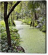 Along The Stream Canvas Print