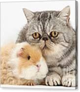 Alpaca Guinea Pig And Silver Tabby Cat Canvas Print
