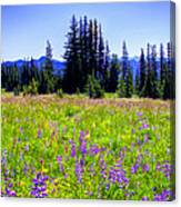 Alpine Meadow V At Mount Rainier Canvas Print