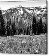 Alpine Meadow Viii At Mount Rainier Canvas Print