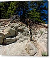 Alpine Pine Hangs On For Life Canvas Print