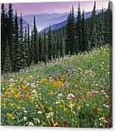 Alpine Wildflower Meadow, Mount Canvas Print