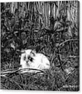 Always Hunting B-w Canvas Print