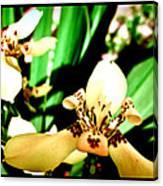 Always Orchids Canvas Print