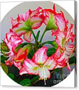 Amaryillis Flower Ring Canvas Print
