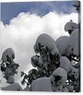 Amazing Arizona Winter Skies Canvas Print